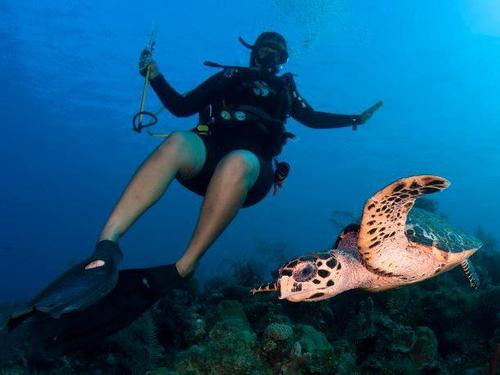 Grand Cayman padi diving Trip Booking