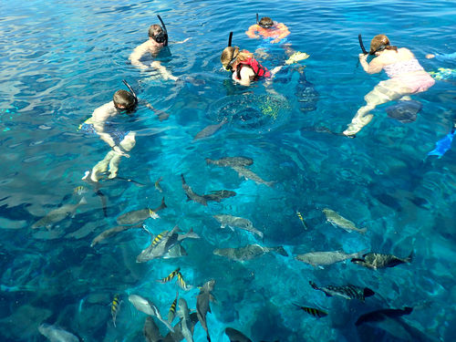 Roatan  Honduras Fun Snorkel Shore Excursion Tickets