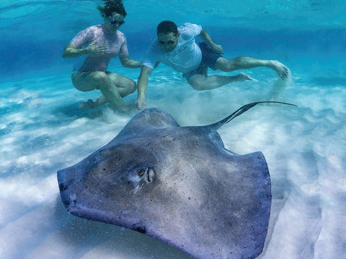 Grand Cayman southern stingray Tour Tickets