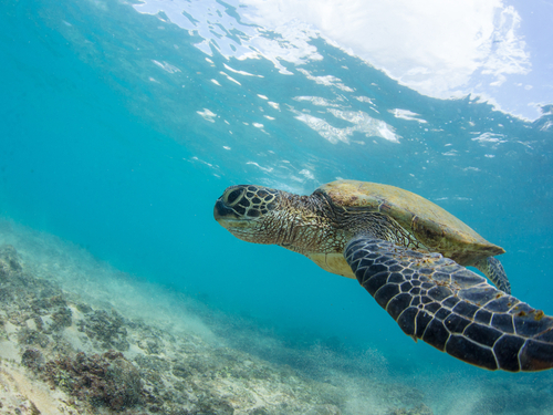 Bonaire snorkeling Cruise Excursion Prices