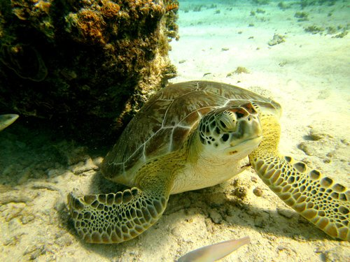 Harvest Caye Belize Coral Cruise Excursion Reservations