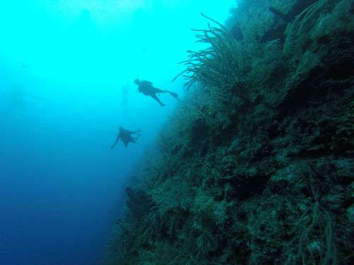 Harvest Caye Belize Coral Scuba Diving Tour Reservations