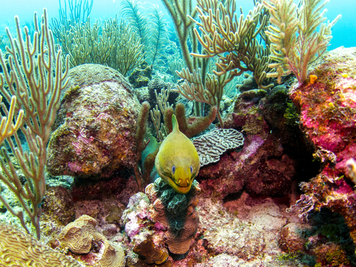Harvest Caye Belize Discover Scuba Scuba Diving Excursion Reservations