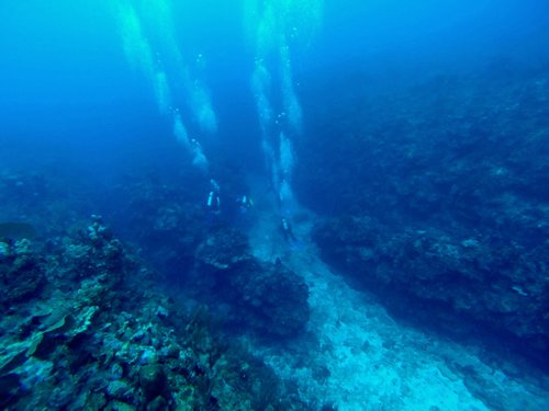 Harvest Caye Belize Discover Scuba Scuba Diving Tour Prices