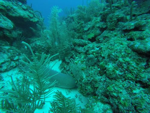Harvest Caye Belize Discover Scuba Shore Excursion Reservations