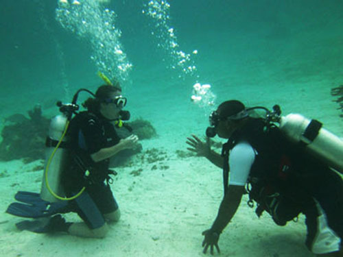 Harvest Caye Belize Harvest Caye Scuba Diving Excursion Cost