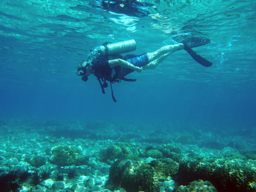 Harvest Caye Belize Laughing Bird Caye Scuba Diving Tour Reservations