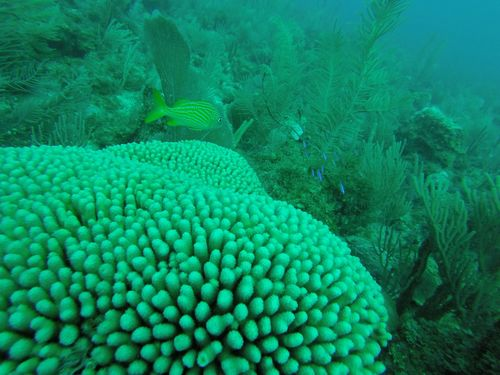 Harvest Caye Belize National Park Scuba Diving Tour Reviews