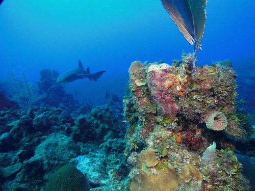 Harvest Caye Belize National Park Scuba Diving Tour Tickets