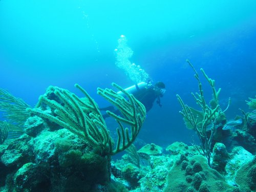 Harvest Caye Belize Tropical Fish Scuba Diving Tour Prices
