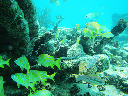 Harvest Caye Belize Tropical Fish Shore Excursion Reviews
