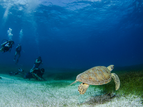 Harvest Caye Discover Scuba Cruise Excursion Tickets
