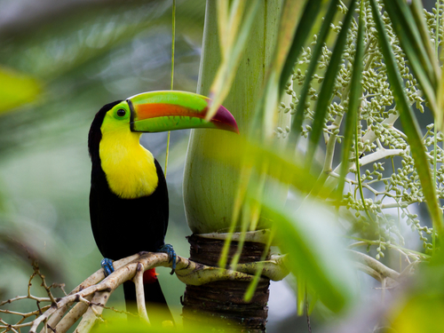 Harvest Caye Jungle Shore Excursion Prices