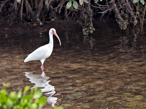 Harvest Caye Nature Walking Cruise Excursion Prices