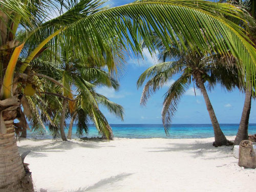 Harvest Caye  Scuba Diving Excursion Reviews