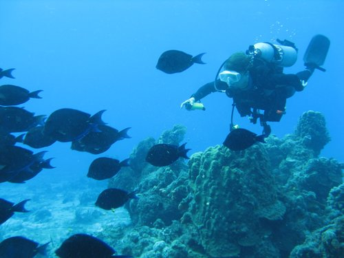 Harvest Caye Scuba Diving Shore Excursion Cost