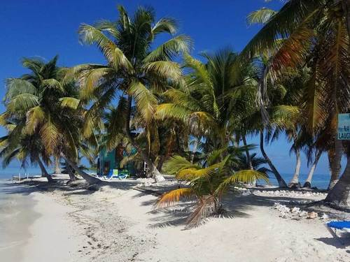 Harvest Caye Tropical Fish Scuba Diving Tour Prices