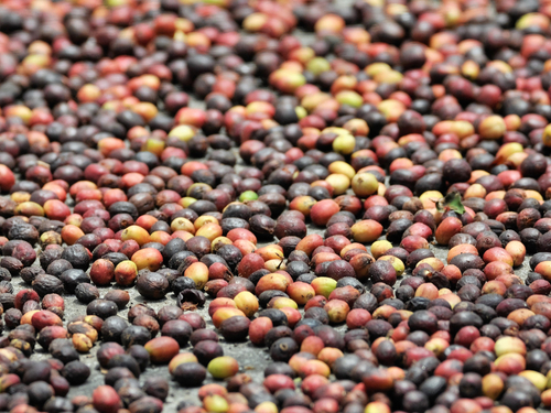 Big Island (Kona) Honaunau Tour Tickets