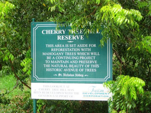 Barbados Cherry Tree Hill Prices