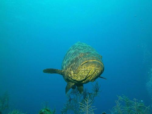 Grand Cayman George Town dive Tour Prices