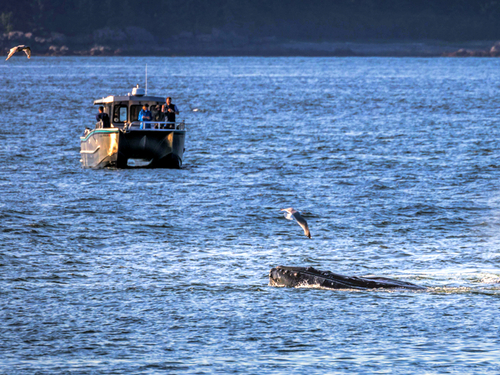Icy Strait (Hoonah) Alaska / USA Sea lion Tour Prices