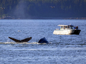 Icy Strait Whale Watching Excursion