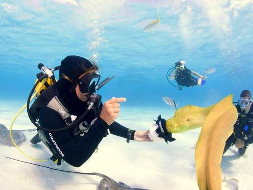 Grand Cayman  Grand Cayman (George Town) Discover SCUBA Dive Cruise Excursion Prices