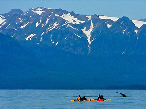 Juneau Kayak with Whales Excursion