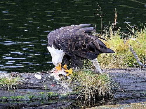 Ketchikan Eagles Tour Reviews