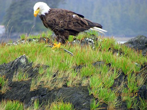 Ketchikan Lighthouse Cruise Excursion Tickets