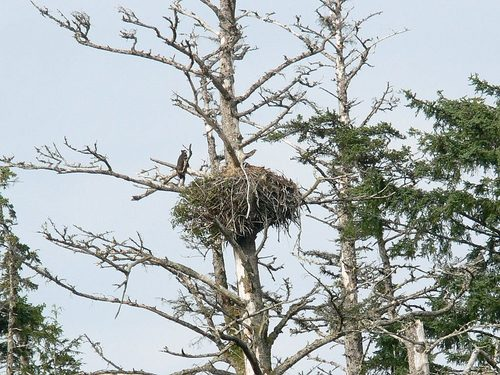 Ketchikan Alaska Eagles Excursion Prices