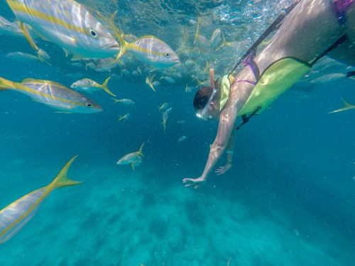 Key West  Florida / USA snorkeling Tour Prices