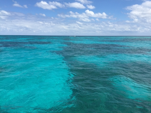 Key West coral reef snorkel Shore Excursion Reviews