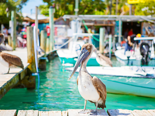 Key West  Florida / USA trolley ride Trip Prices