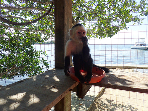 Roatan One Mile Snorkel Shore Excursion Reviews