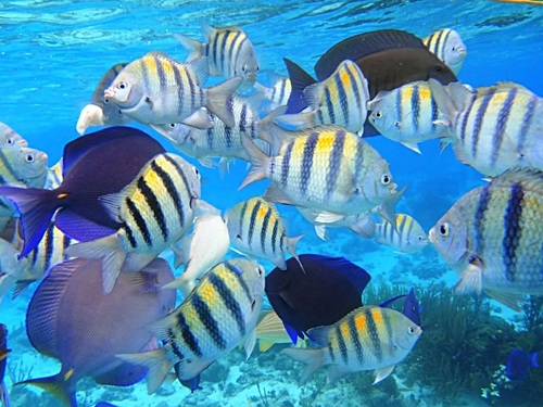 Grand Cayman coral barrier reef snorkel Prices