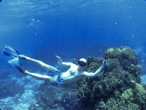 Costa Maya snorkeling  Cruise Excursion Cost