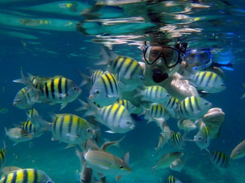 Cabo San Lucas  Mexico numerous fish Reservations