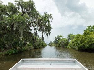 New Orleans Bayou and Swamp Excursion