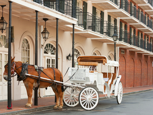 New Orleans Tulane and Loyola Universities Shore Excursion Booking