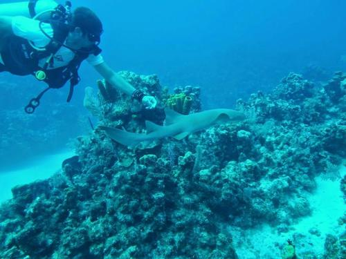 Grand Cayman George Town scuba Trip Booking