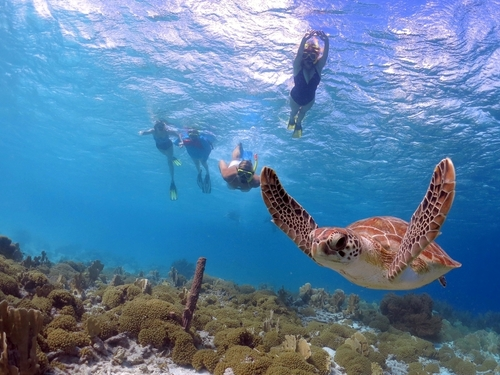 Belize snorkeling Cruise Excursion Cost