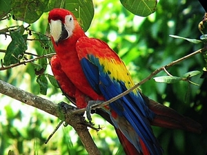 Puerto Caldera Rainforest Treetop Skywalk, River Cruise and Sightseeing Excursion