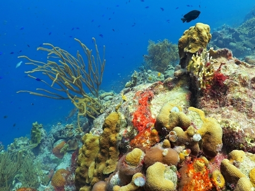 Roatan All Inclusive Snorkel Trip Reservations