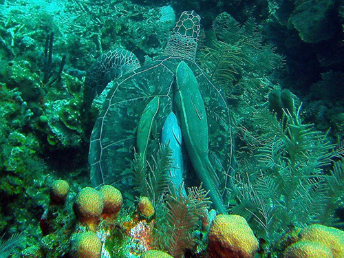 Roatan Colorful Fish Diving Shore Excursion Reservations