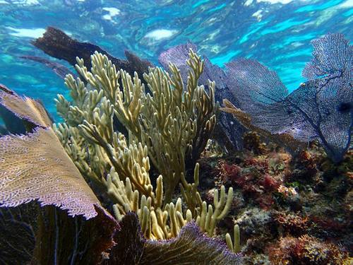 Roatan Colorful Fish Shore Excursion Reviews