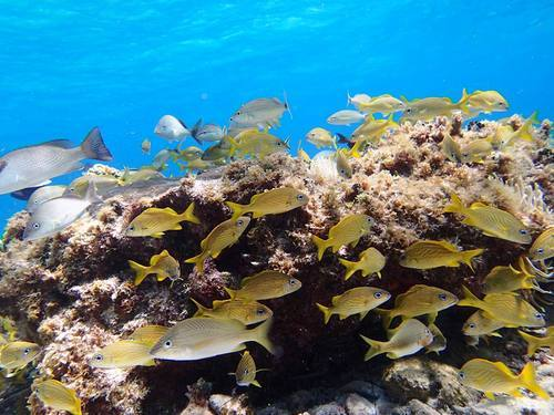 Roatan Coral Reef  Cruise Excursion Reservations