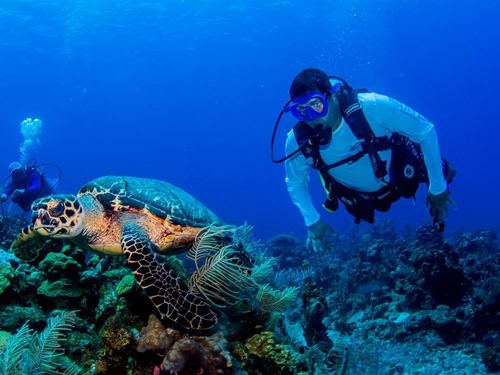 Roatan Coral Reefs Diving Cruise Excursion Reviews