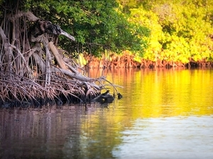 Roatan East End Sightseeing, Island Mangroves, Iguana Farm and Coral Reef Snorkeling Excursion