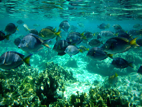 Roatan Honduras 2 Reef Snorkel Cruise Excursion Prices